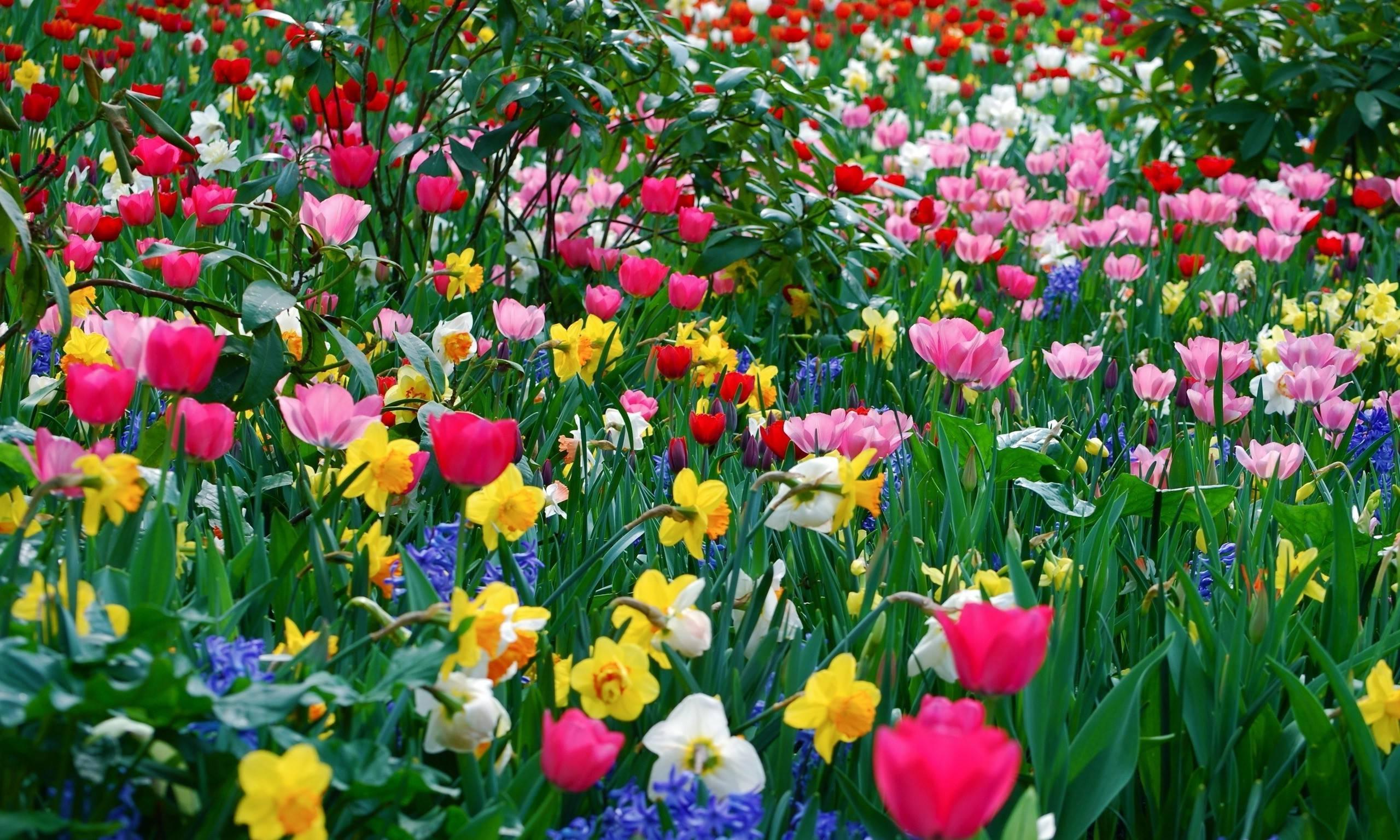 Free download best spring flowers images wallpaper spring flowers mightylinksfo