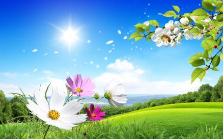 Spring Nature Wallpaper