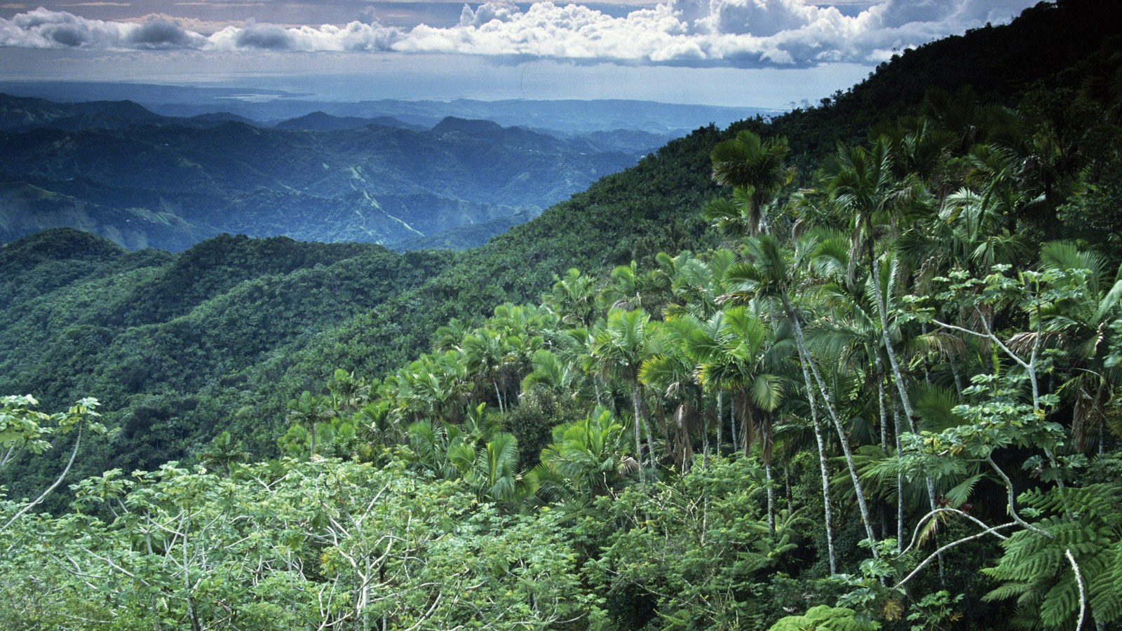 30 Picture Of Tropical Rainforest In Hdq Cover