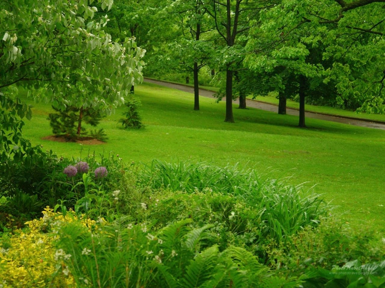 Stunning Green Forest Backgrounds