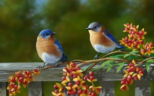 Beautiful Birds Picture