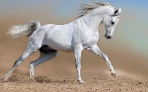 Horses Running Images