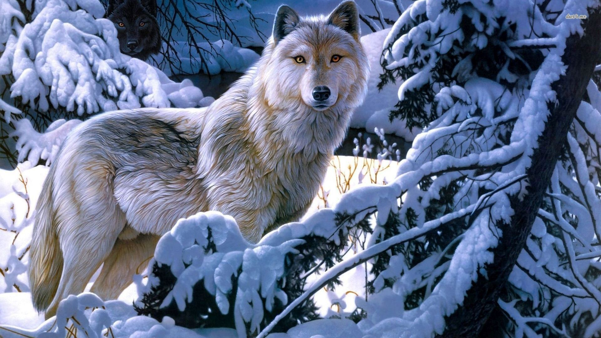 White Wolf Wallpaper For Mobile