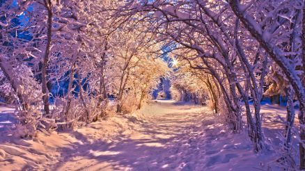 Wallpaper Widescreen Winter