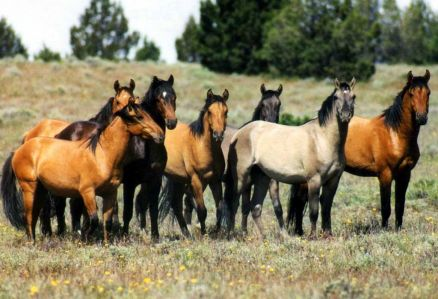 Pictures Of Wild Horse