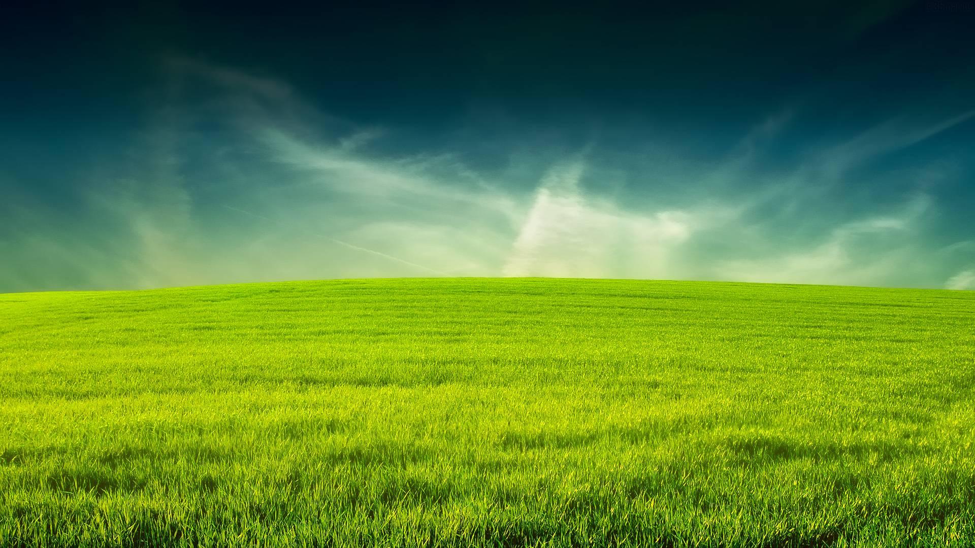 grass hd wallpapers p