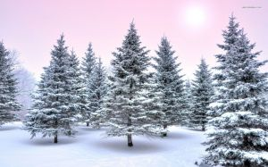 Winter Forest Image