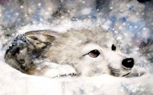 Images Of Wolf In Snow