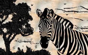 Images Of Zebra